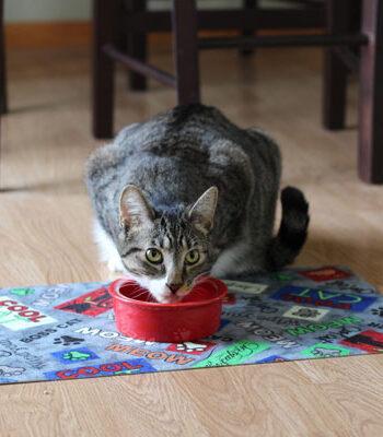 Cat Bowl Placemat
